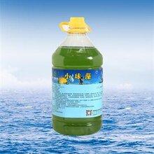 小球藻图片