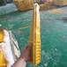 安陽玻璃鋼電纜管線支架