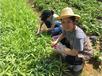 廣州天河區天河南周邊可以野炊的農家樂帽峰山生態園