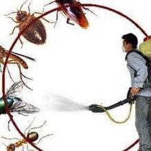 桂林灭老鼠-防治公司图片