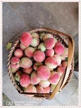 长沙县胖仔农庄有机水果——桃子图片