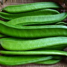長沙有機生態農莊有機蔬菜——刀豆圖片