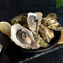 生蚝批发多少钱一件漳浦生蚝的价格图片