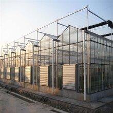 白城阳光板玻璃大棚专业建设玻璃温室大棚建设安装玻璃温室效果图龙鑫温室