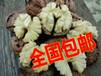 新鮮生核桃去青皮云南帶殼鮮核桃綠皮薄殼