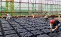 新疆乌鲁木齐内置箱现浇钢筋混凝土空心楼盖组合空心内模生产商