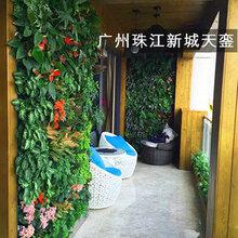 室内植物背景墙