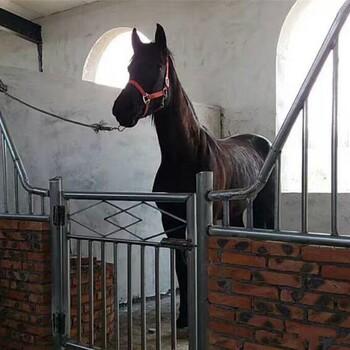 新疆马匹养殖经销商
