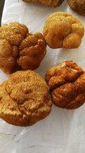 东北猴头菇蘑菇批发产地批发质优价廉图片