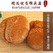 中国猴头菇之乡产地批发零售猴头菇图片