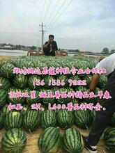 潍坊西瓜,潍县萝卜,苹果,甜瓜,葡萄等图片