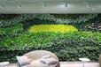 仿真植物墻-仿真植物墻一平多少錢-雄安美尚園藝-價格實惠