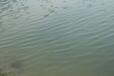 河南黑臭河道治理微生物水質改良劑廠家銷售