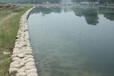 山东城市景观河道生态修复水质改良微生物菌剂
