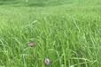 江西重金屬土壤改良修復微生物菌