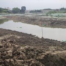 重庆黑臭河道水体治理微生物净化剂厂家直销图片