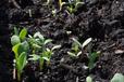 北京微生物菌土壤改良劑廠家批發銷售