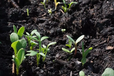 湖南污染土壤凈化修復技術微生物土壤改良劑