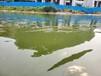 陜西河道湖泊生態修復原位生物固化技術