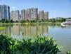 湖北水環境生態修復原位生物固化底泥改良劑