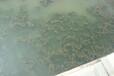 浙江黑臭水體治理底泥生態修復底質團粒改良劑