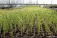 北京復合微生物團粒結構土壤改良劑