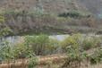 河北污染水體生態修復技術復合微生物