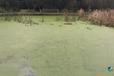 杭州河道淤泥污染底泥固化劑