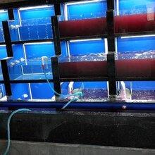 金平酒店土建海鲜池不锈钢底座加玻璃海鲜池定做