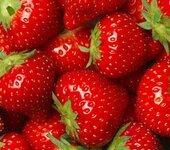 脱毒品种草莓苗什么价格