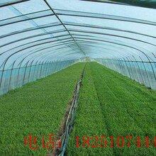 永州江永县草莓种植大棚大棚厂家送货上门图片
