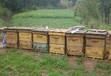 新余蜂蜜养殖基地