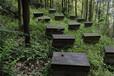 瑞昌蜂蜜養殖基地