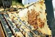 蜂蜜厂家直销