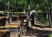 三亞蜂蜜養殖基地