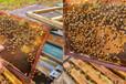 南昌蜂蜜养殖基地