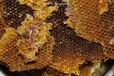 寶山區蜂蜜批發價格