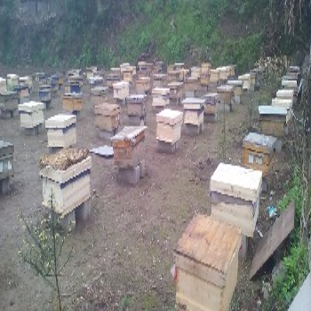 蜜蜂养殖场