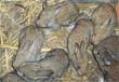 长泰县散养肉兔买兔免费教技术