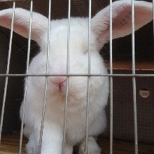 贵州散养杂交野兔养殖一只兔子的利润