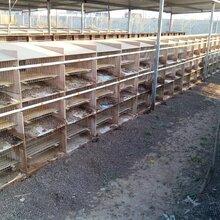 贵阳散养杂交野兔养殖去哪里买种兔