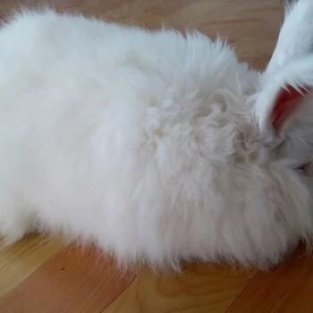 克什克腾旗杂交野兔养殖