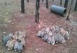 巴彦淖尔比利时兔多少钱一只