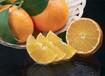 象山紅美人柑橘禮盒裝直發上海