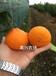 象山紅美人桔子果凍橙直發浙江杭州寧波溫州臺州湖州嘉興
