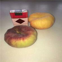 新品种北京14号桃树苗、新品种北京14号桃树苗价格图片