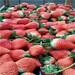 圣诞红草莓苗价格是多少钱