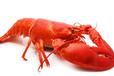 澳洲龍蝦進口清關流程和清關水產品清關代理