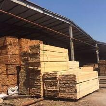 建筑木方,建筑方木加工,輻射松,鐵杉,花旗松,圖片