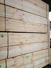 供应木方,铁杉,花旗松图怪��片